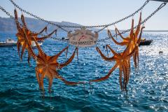 Tintenfisch am Meer